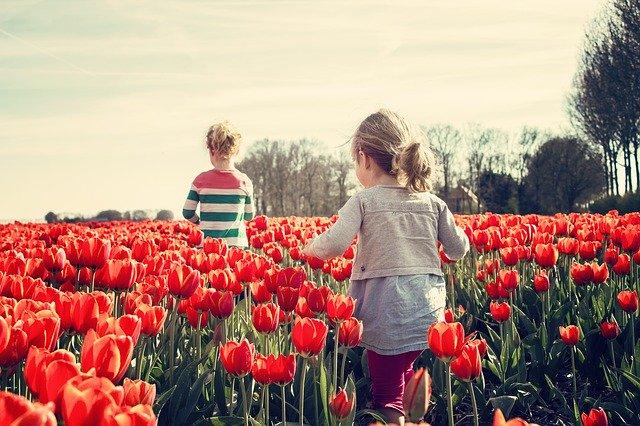 niños juegan en el campo de tulipanes